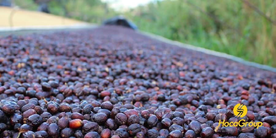 Cà phê được sơ chế và phơi theo phương pháp natural