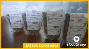 Mẫu hạt cà phê nhân: Cách chọn và bảo quản